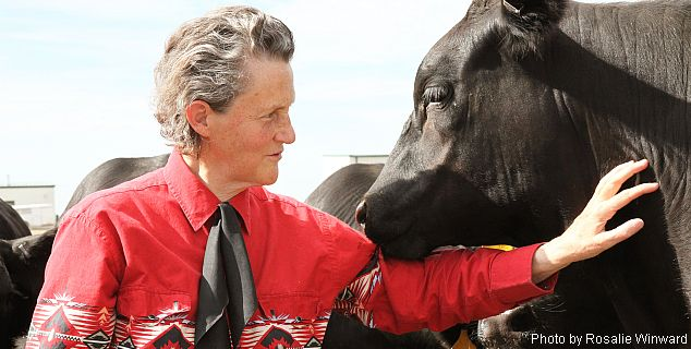 Temple Grandin with cow